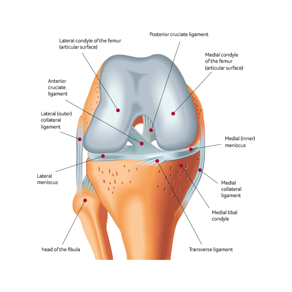 Total Knee Replacement Surgery at Sports Surgery Clinic